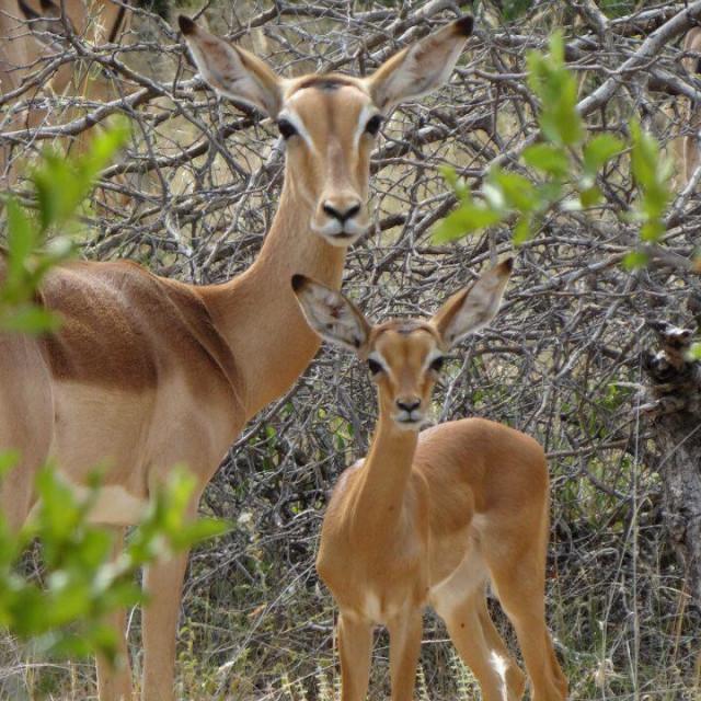 """""""Kruger Park - South Africa"""" stock image"""