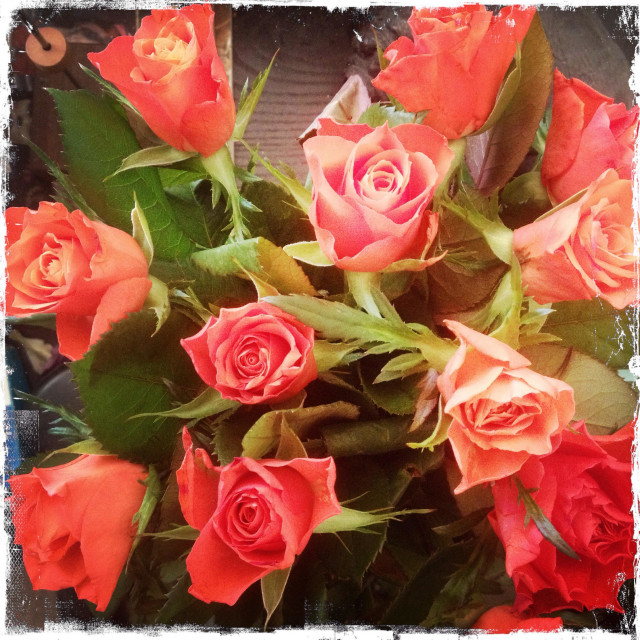 """""""A bunch of roses."""" stock image"""