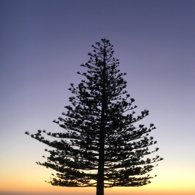 """Tree silhouette Sunrise New Zealand"" stock image"