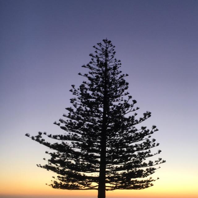"""Tree silhouette Sunrise New Zealand"" stock image"