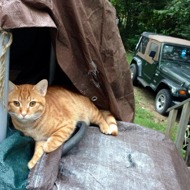 """""""Orange domestic tabby cat lying on covered generator on outdoor deck"""" stock image"""