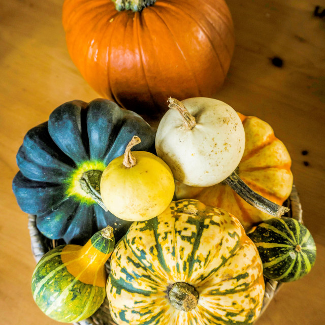 """Gourd and Pumpkin"" stock image"