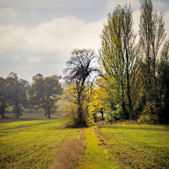 """Country Lane in Winter"" stock image"