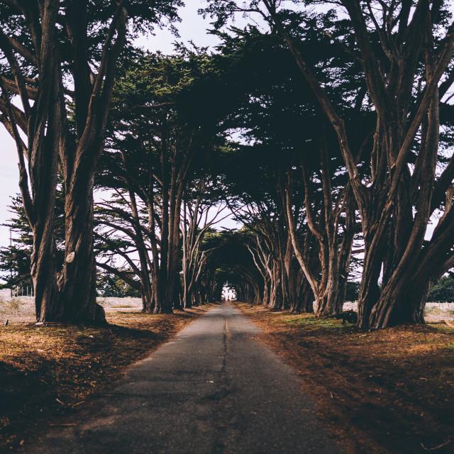 """Cypress"" stock image"
