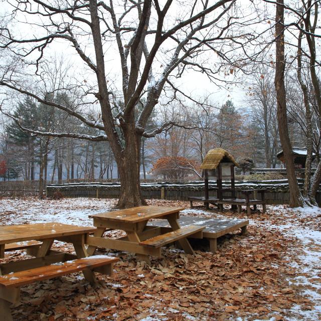 """Winter Beauty"" stock image"