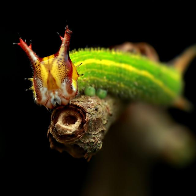 """""""Caterpillar"""" stock image"""