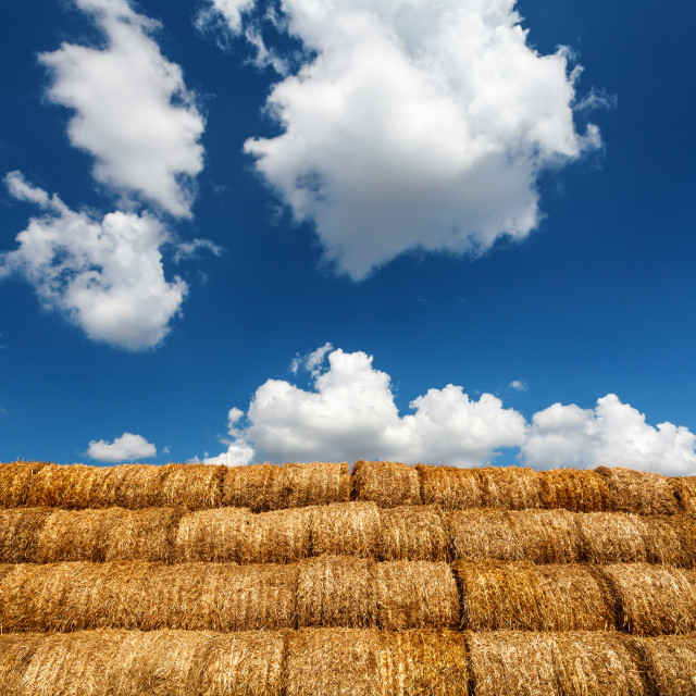 """Bales of straw under blue cloudy sky"" stock image"