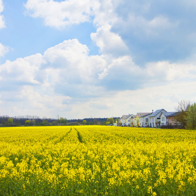 """""""Springtime in Bavaria, houses in the middle of yellow fields of canola..."""" stock image"""