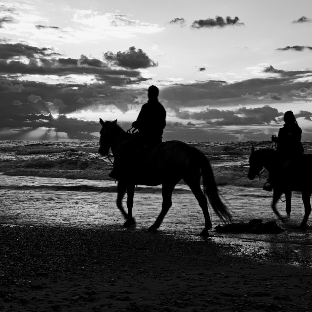 """Horses on the beach"" stock image"
