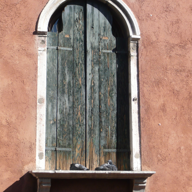 """Shuttered window with sleeping pigeons, Venice."" stock image"