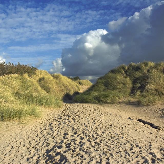 """""""Sand dunes Newborough Beach"""" stock image"""