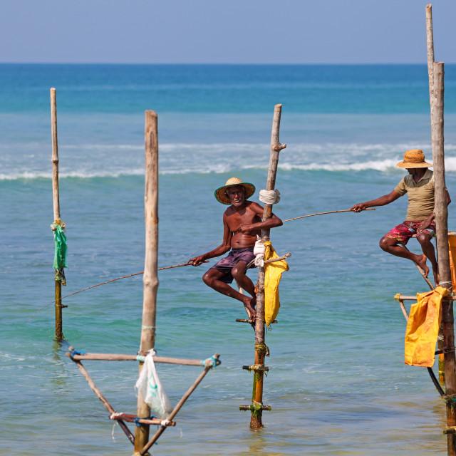 """""""Stilt fishing, Weligama, Sri Lanka"""" stock image"""