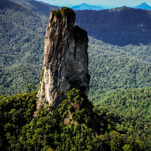 """Central Borneo Rainforest"" stock image"