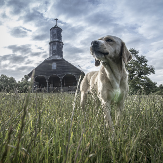 """A dog in front of chiloe church."" stock image"