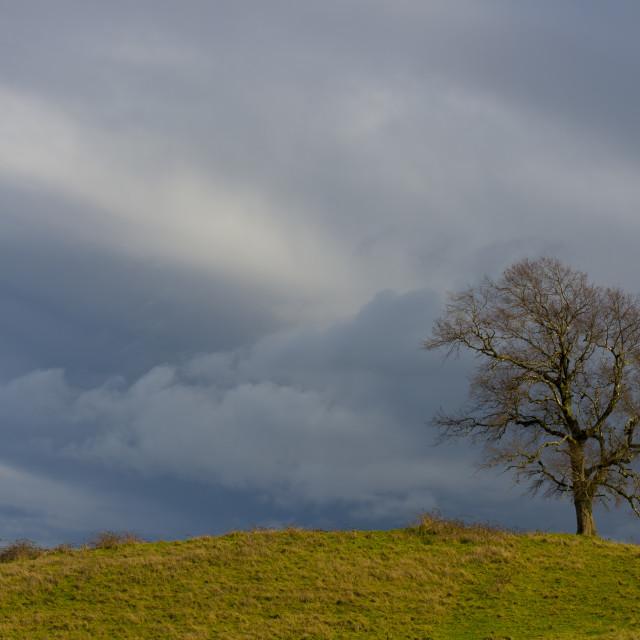 """Tree between clouds"" stock image"