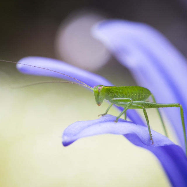 """Katydid watchdog"" stock image"