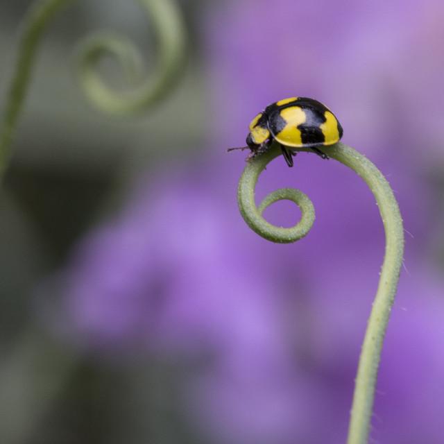 """""""Ladybug Twirls"""" stock image"""