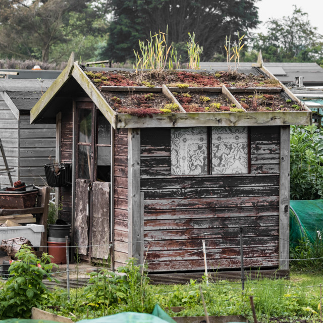 """The Allotment Shed"" stock image"