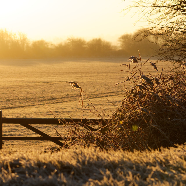 """The gate in winter"" stock image"