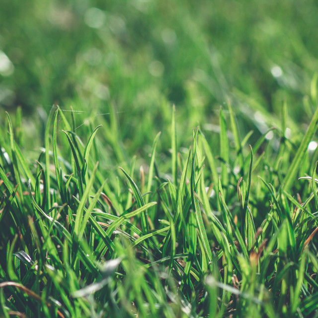 """""""Green grass in a bright day dew close up macro"""" stock image"""