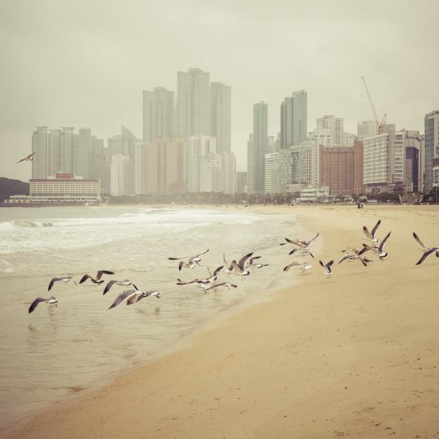 """""""BUSAN - OCTOBER 27, 2016: Haeundae beach is Busan's most popular beach..."""" stock image"""