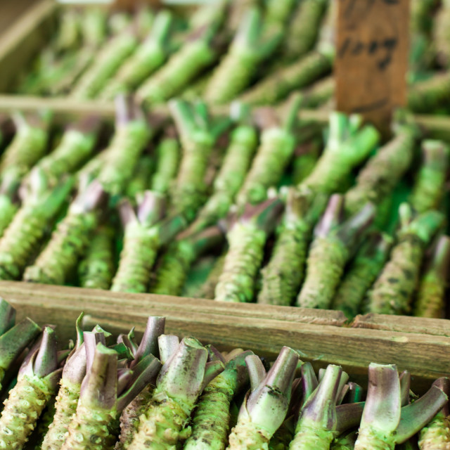 """Wasabi root for sale in a typical japanese market"" stock image"