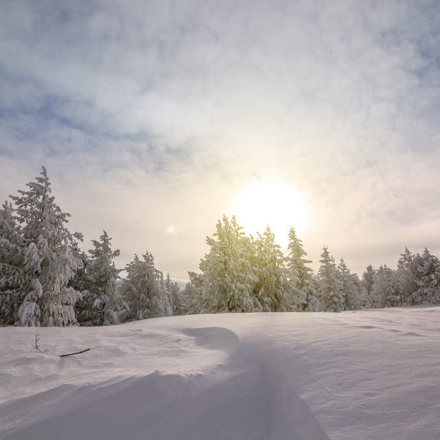 """""""Colorful winter morning in the mountains at sunrise"""" stock image"""