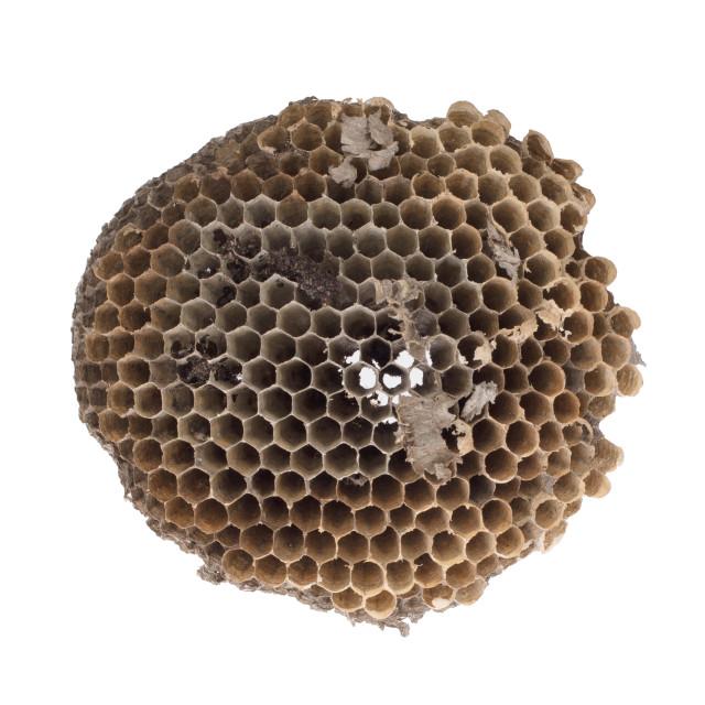 """Old honeycomb isolated"" stock image"