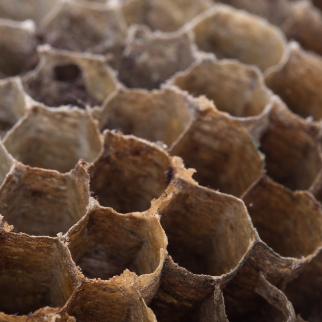 """""""Old honeycomb isolated - Selective focus"""" stock image"""
