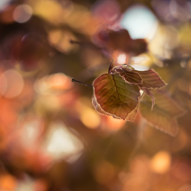"""Autumn bokeh"" stock image"