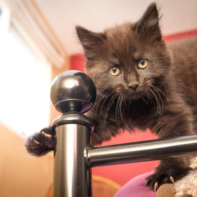 """""""bed post kitten"""" stock image"""