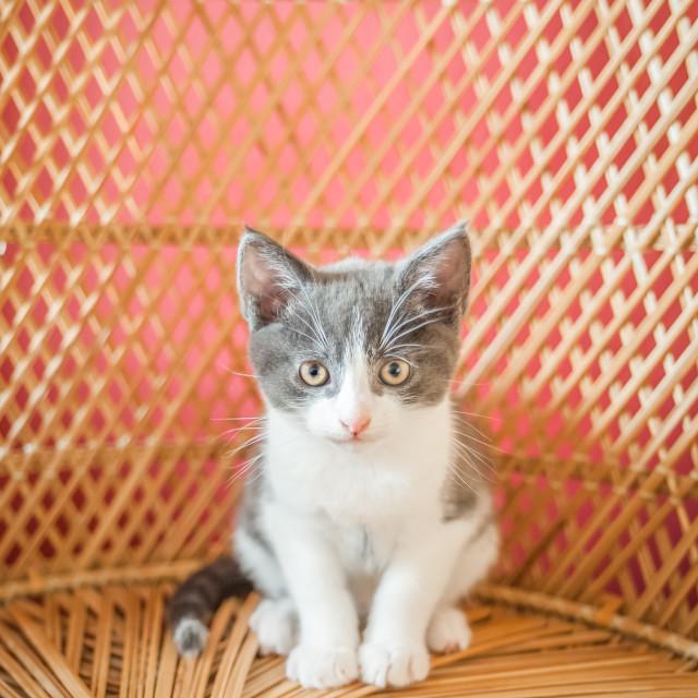 """I am a kitten"" stock image"