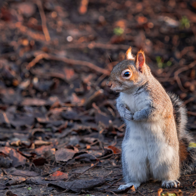 """""""Please, can I get a nut ?"""" stock image"""