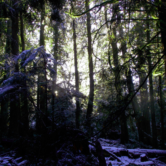 """""""The sun breaks through the forest"""" stock image"""