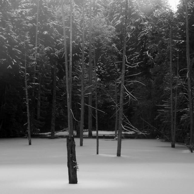 """""""Frozen lake sunshine"""" stock image"""