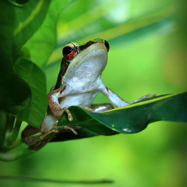 """Froggy"" stock image"