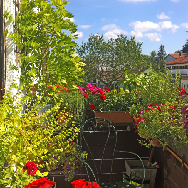 """""""Home balcony in summer, spices, herbs, flowers"""" stock image"""