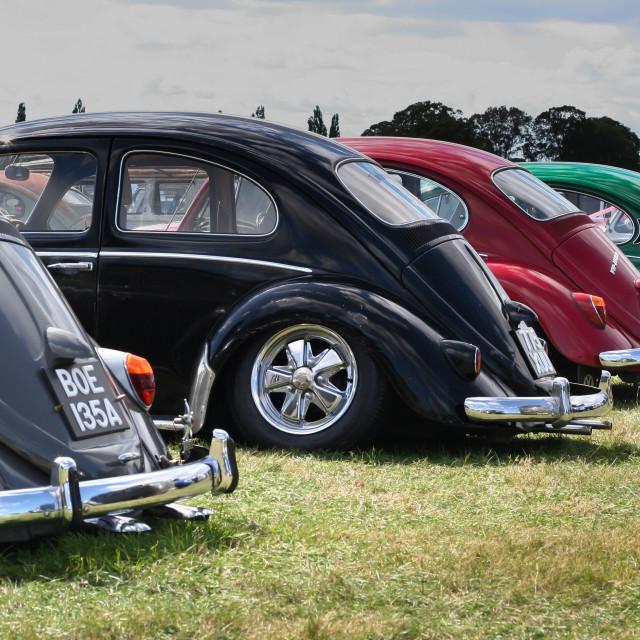 """""""Classic Volkswagen Beetle Line up"""" stock image"""
