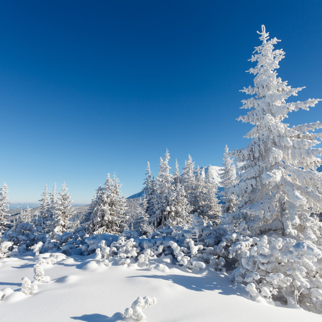 """Winter mountain landscape"" stock image"