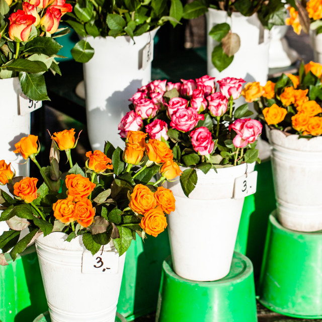 """Colorful flowers in a flower shop on a market"" stock image"