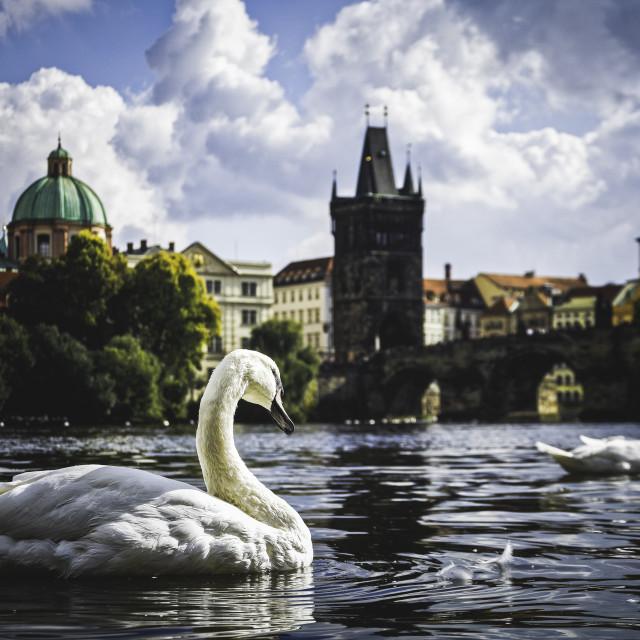 """""""Beautiful Prague."""" stock image"""