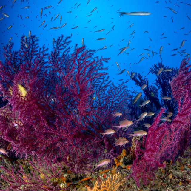 """Capri underwater"" stock image"