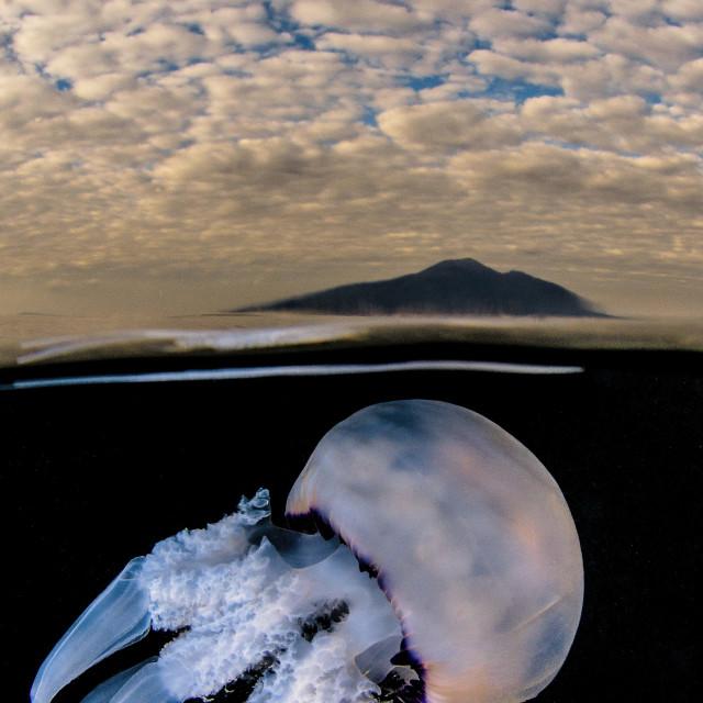"""Jellyfish under the Vesuvio"" stock image"
