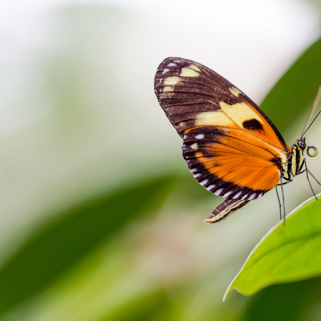 """Exotic butterflies extreme macro shots in vibrant colors."" stock image"