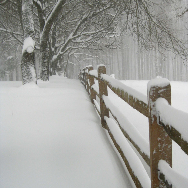 """""""wooden fence in snow"""" stock image"""