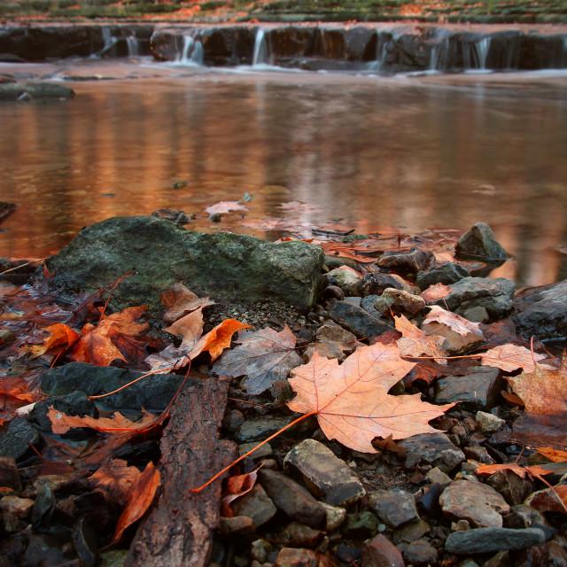 """Morning at the Creek"" stock image"