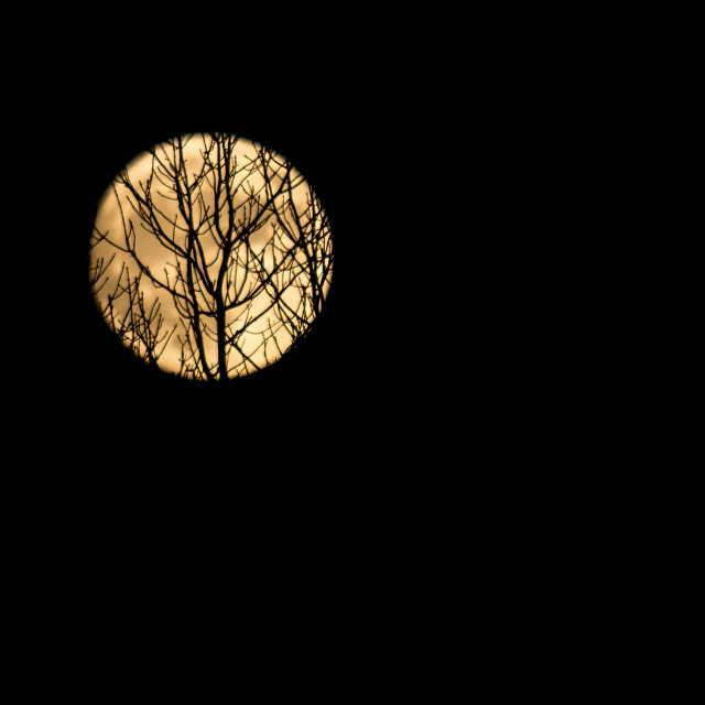"""Tree silhouette on moon light"" stock image"