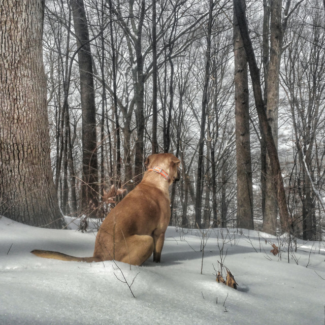 """""""dog sits in snow"""" stock image"""