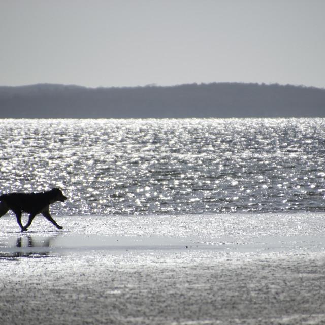 """""""Summer Dog"""" stock image"""