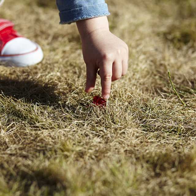 """A child picking up a dropped sweet from the grass."" stock image"